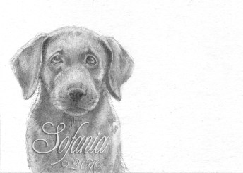 graphite_puppy1_w-wm
