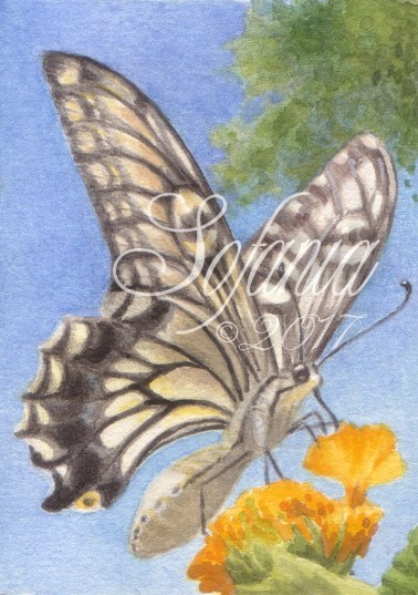 ACEO_butterflies002