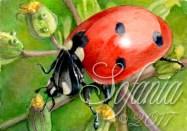 Ladybug I
