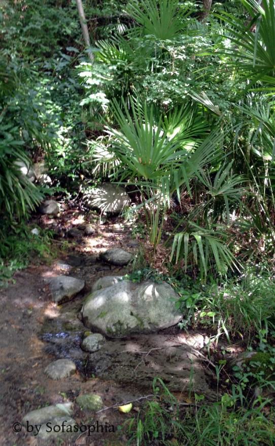 31_im Dschungel