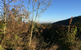 Himmelblau über Wald