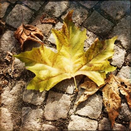 Goldgelbes Platanenblatt von zerkrümelten Blättern umringt.