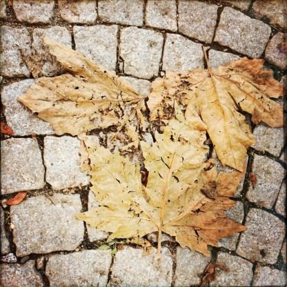 Zerkrümelte Platanenblätter