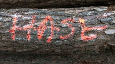 Holzstamm mit den Worten Hase aufgesprayt
