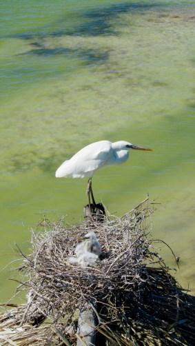 Bird and bird's nest