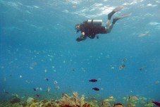 Diver and lots of fishes :)