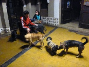 Waiting for everyone in the morning with the dogs of the park... you see it was still dark outside!