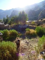 The donkey woke me up in the morning. Haha.