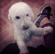 Keyla, such a sweet dog!!! Looks like a little sheep :)