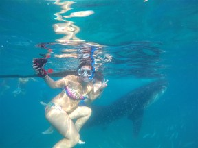 Me in front of a whaleshark