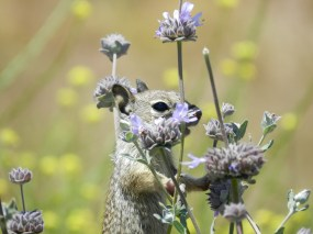 MR SQUIRREL AND PURPLE WILDFLOWERS