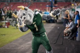 USF Mascot Rocky the Bull Dabs