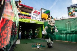 38 - UCF vs. USF 2018 - USF Mascot Rocky D. Bull Exiting Tunnel at Raymond James Stadium by Dennis Akers | SoFloBulls.com