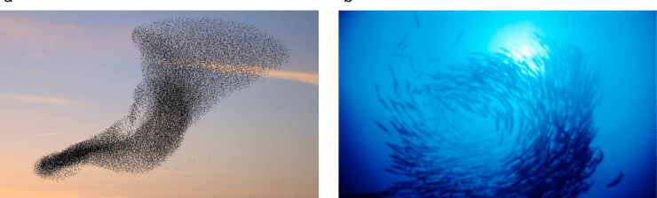 birds_fishes