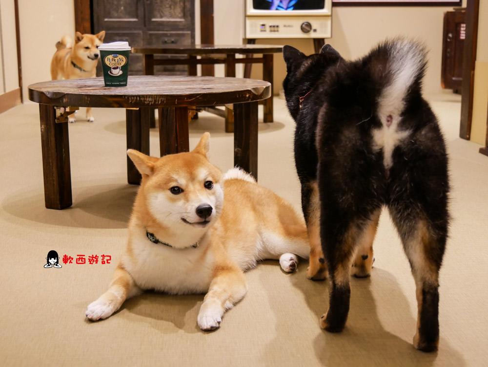 日本福岡景點推薦》豆柴咖啡廳●福岡柴犬咖啡廳! 呆萌柴犬圍繞~福岡最療癒咖啡廳 福岡豆柴咖啡廳/福岡景點