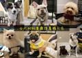 最萌店狗陪吃》台北狗狗餐廳推薦●跟可愛狗狗貓貓一起玩一起吃飯! 台北最萌寵物餐廳推薦 (持續更新)
