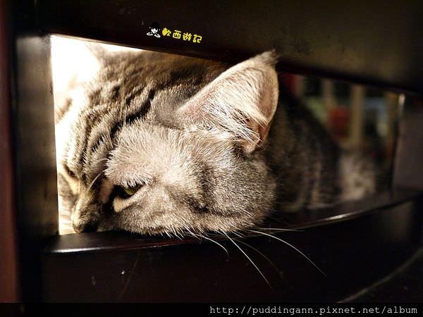 (已歇業)[愛評口碑]台北忠孝復興站 貓咪先生的朋友 萌貓伴食 跟可愛療癒店貓一起吃豐盛早午餐吧 *WIFI 菜單* 套餐/單點 忠孝復興餐廳/忠孝復興美食/貓咪餐廳