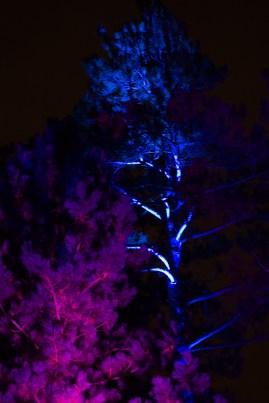 illumination-1351