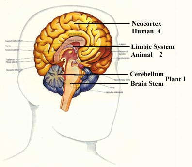 The Mind Of The Programmer Anatomy And 3 Contradictions Software