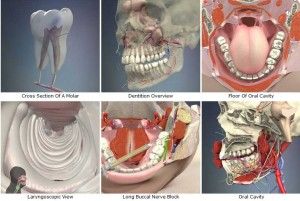 3D Head and Neck Anatomy For Dentistry
