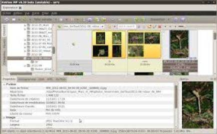 XnView 2.49.3 With Crack Plus Serial Key 2020 Free Download