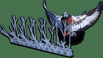 Professional Cost effective Pigeon removal Edinburgh www.softwashscotland.com