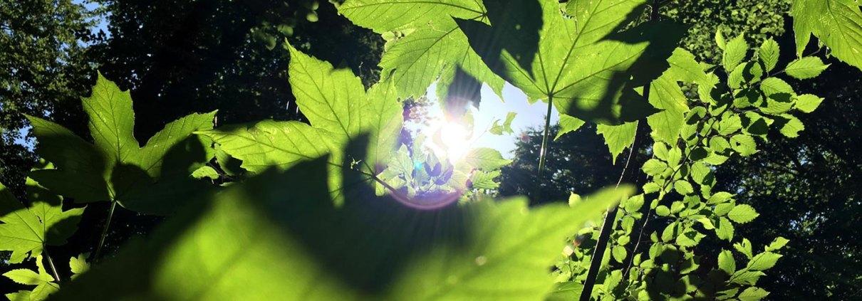 NEUBEGINN – Back to Nature |So geht Freiheit |Jan Stiewe
