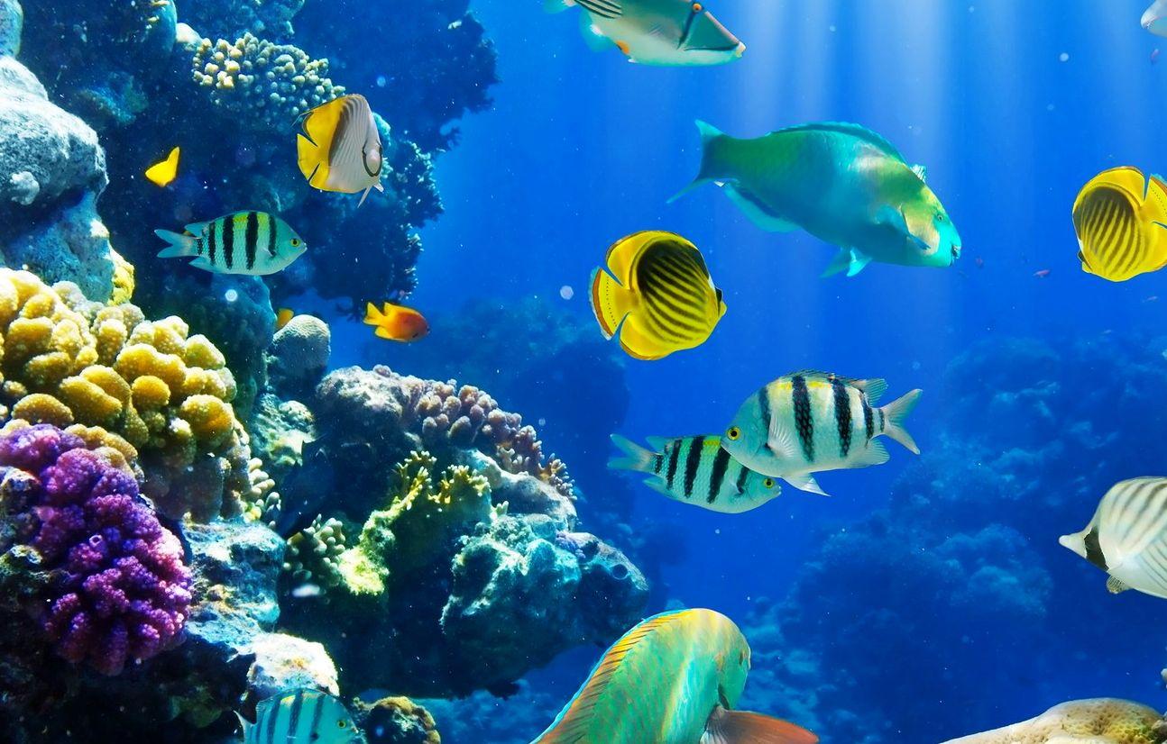 Sognare Pesci Che Significa Interpretazione E Numeri Al Lotto