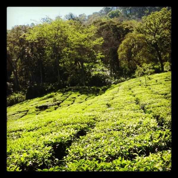 Enchanting Kerala - A Picturesque Journey (1/6)