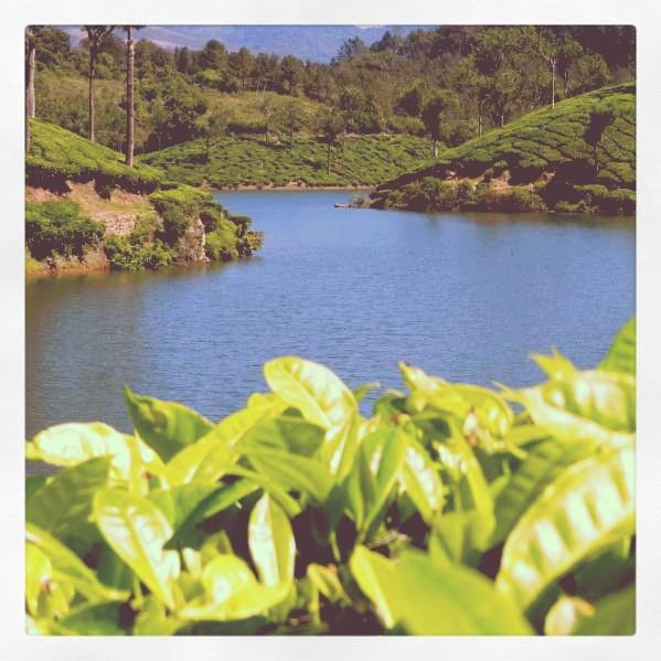 Enchanting Kerala - A Picturesque Journey (2/6)