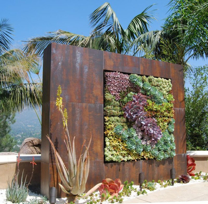 Wall screen made with succulents