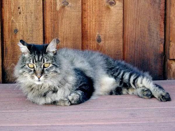 Panduan Lengkap Bagaimana Memelihara Kucing   sohoque.com