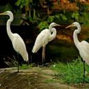 flaminggo