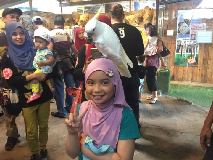 kl-tower-mini-zoo-burung-iffah