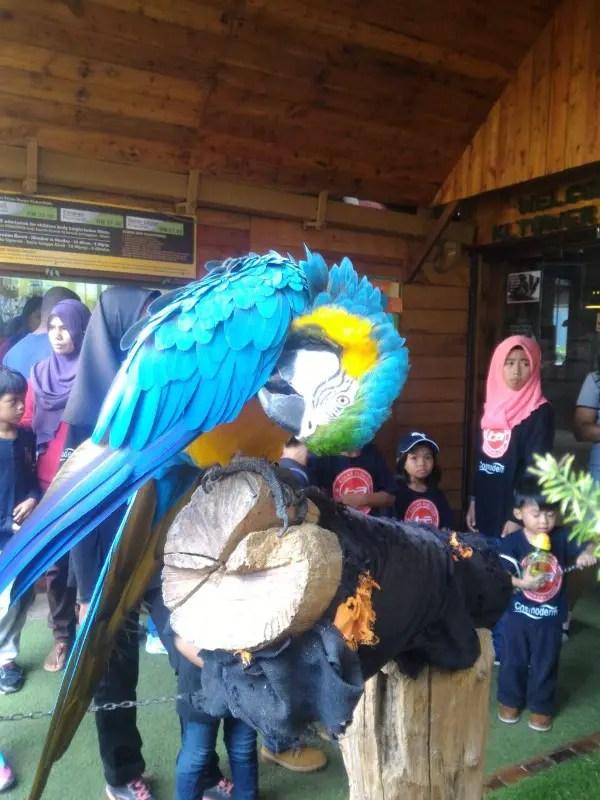 kl-tower-mini-zoo-parrot