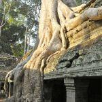 ta prohm temples ankor wat