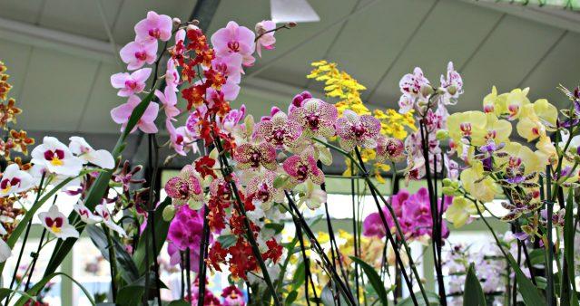 Pavillon Baetrix et ses orchidés