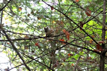 Les chipmunks du Parc de la Mauricie