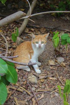 Chat à l'ïlet à Cabrit