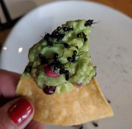 Eating Bugs Ant Guacamole
