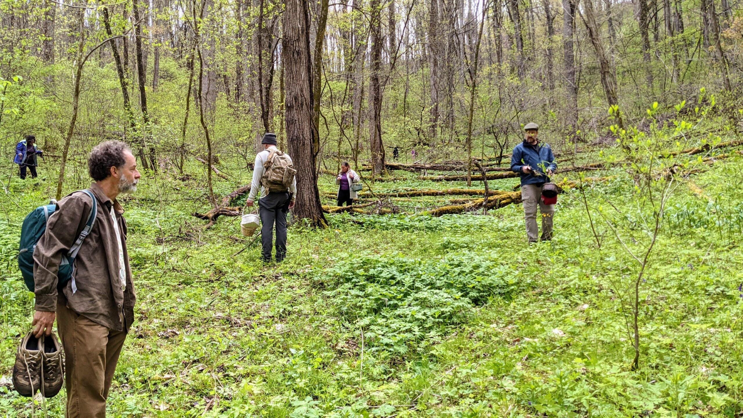 Hunting Morels and Ramps in North Carolina