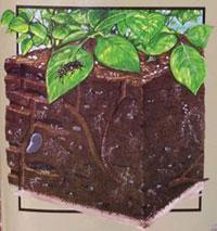 biological activity in soil