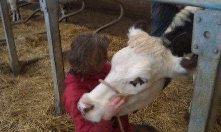 Comment établir une communication animale «télépathique» (2) ?