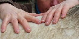 Position des mains dans le toucher