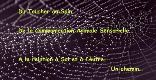 Toucher Communication Animale Sensorielle