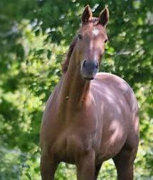 Je me présente: VIP cheval de CSO pieds nus