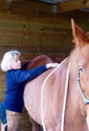 masser et étirer dos cheval