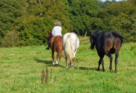 Les vraies raisons des problèmes physiques des chevaux