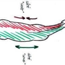Dissymétrie du cheval, ostéopathie, parage