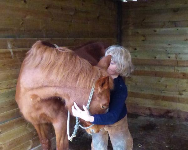 Des soins du cheval dans le calme